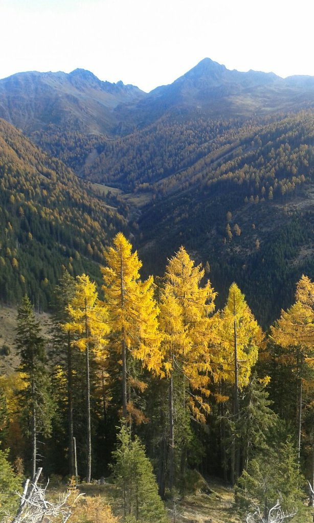 Der-Herbst-in-seinem-schoensten-Gewand.jpg